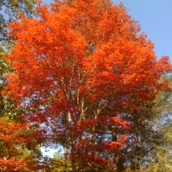 Oct 2010 NC Arboretum II 004